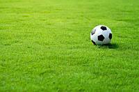Спортивная газонная трава