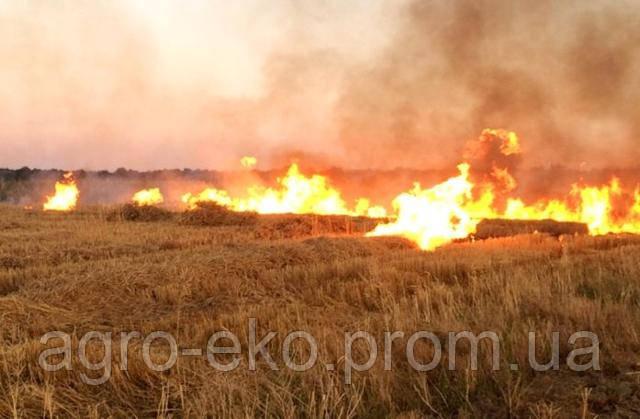 Спалювання стерні пшениці та ентомофауна