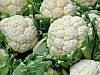 Семена цветной капусты Каспер F1 \ Kasper F1 1000 семян Rijk Zwaan