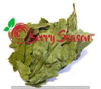 Смородина, листья