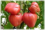 Томат Бычье сердце розовый 0,15г, фото 3