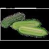 Семена огурца корнишон Вагнер F1 1000 семян Rijk Zwaan