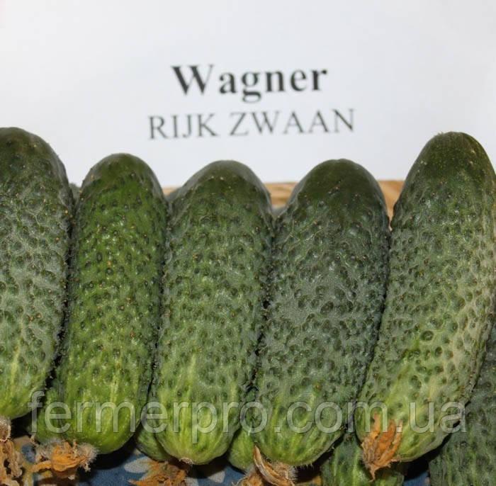 Семена огурца Вагнер F1 \ Wagner F1 250 семян Rijk Zwaan