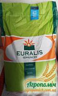 Семена подсолнечника ЕС Флоримис ES Florimis