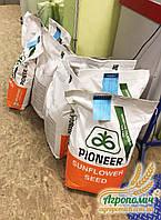 Семена подсолнечника Пионер  П64ЛЕ25 P64LE25