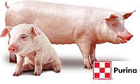 Концентрат універсальний для свиней стартер 25% /гроуер 15%/ фінішер 10% - 20020 (25 кг)