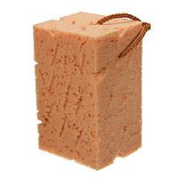 8 см толщиной соты макропористая очистки коралловые мойка мягкой губкой