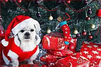 График работы магазина в канун Нового года и праздничные дни!!!