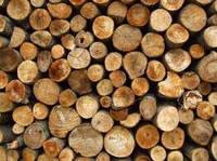 Лес Кругляк бревна рудстойка пиловник пиловочник различного диаметра  дрова  доска брус шалевка горбыль