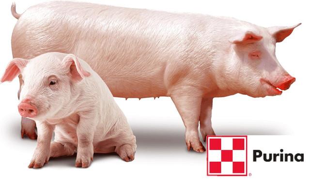 Премиксы и кормовые добавки для свиней ТМ Purina