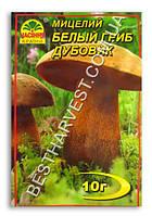 Мицелий «Белый гриб Дубовик» 10 г