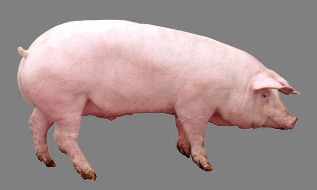 Премикс для свиней (от 120 дня) Финишер МАХ 2,5%