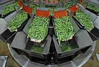Линия для автоматической фасовки и упаковки замороженных овощей (спаржа, брокколи)