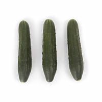 Семена огурца святогор F1 \ Svyatogor F1 1000 семян Rijk Zwaan