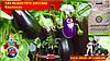 Как вырастить рассаду баклажанов из семян