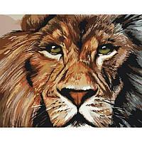 """Картины раскраски по номерам """"Львиный взгляд"""" набор для творчества"""