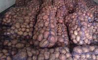 Продам семенной картофель розница