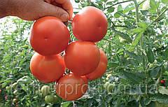 Семена томата Лилос F1 \ Lilos F1 1000 семян  Rijk Zwaan