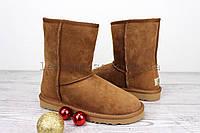 Угги женские коричневые UGG Australia Classic Short Chestnut Original | Угги Австралия классик шорт зимние, фото 1