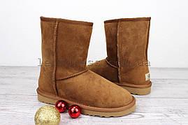 Угги женские коричневые UGG Australia Classic Short Chestnut Original | Угги Австралия классик шорт зимние