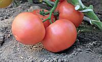Семена томата Эсмира F1 \  Esmira F1 Rijk Zwaan 100 семян