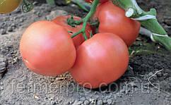 Семена томата Эсмира F1 \  Esmira F1 Rijk Zwaan 1000 семян