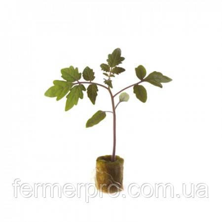 Эмперадор \ Emperador RZ F1 1000 семян  Подвой для томата и баклажана