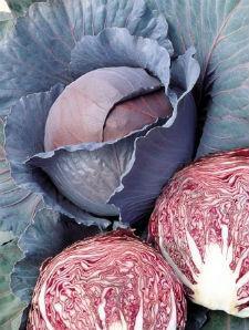Семена капусты Рэд Династи F1 2500 семян  1,8-2,0