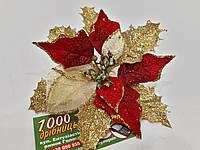 Рождественник (Пуансетия) 75209