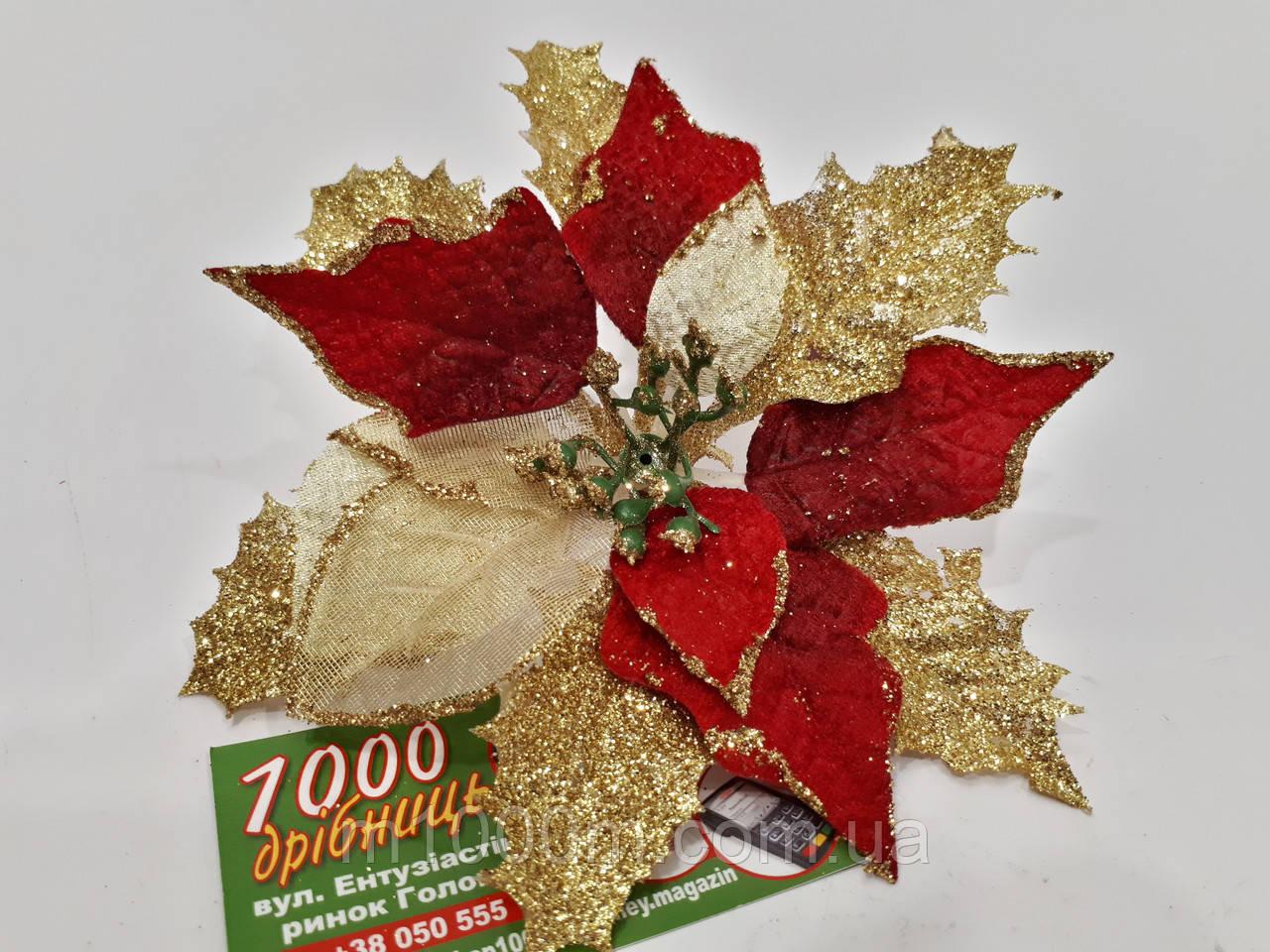 Рождественник (Пуансетия) 75209, фото 1