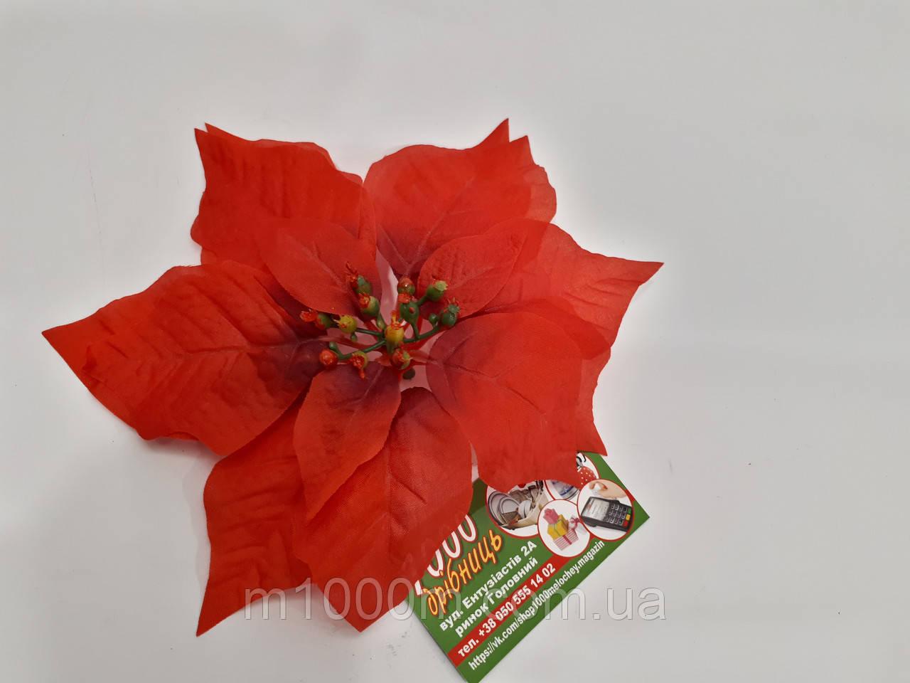 Рождественник (Пуансетия) 1232Р красная с темной серединкой