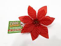 Рождественник (Пуансетия) 75161 Красный
