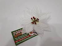Рождественник (Пуансетия) 75161 Белый