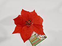 Рождественник (Пуансетия) 1232Р красная