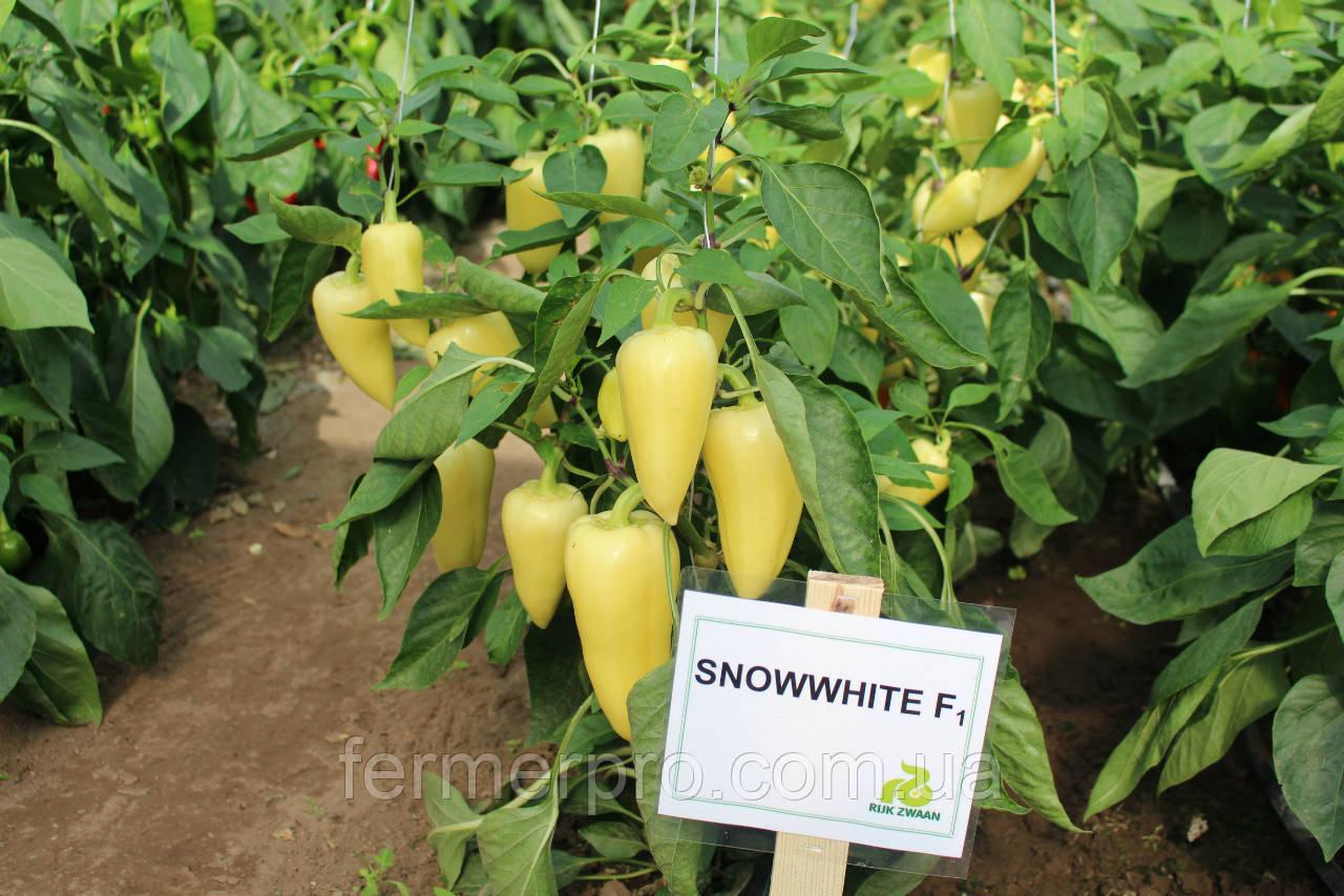 Семена перца Сноувайт F1 \ Snowwhite F1 1000 семян Rijk Zwaan