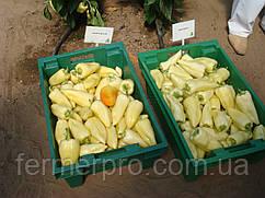 Семена перца Сноувайт F1 \ Snowwhite F1 100 семян Rijk Zwaan