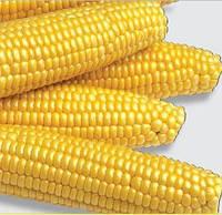 Кукуруза сахарная Аранка F1, 50 г
