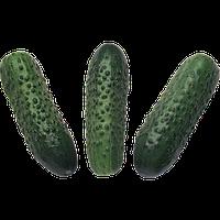 Семена огурца корнишон Соната F1 50 гр. Rijk Zwaan