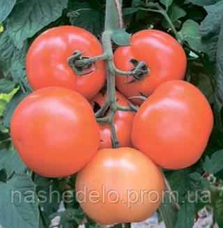 Семена томата Лилос F1 100 семян Rijk Zwaan