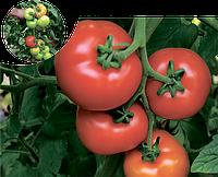 Семена томата Аламина F1 100 семян Rijk Zwaan