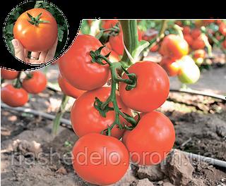 Семена томата Чинто F1 100 семян Rijk Zwaan
