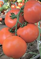 Семена томата Махитос F1 100 семян Rijk Zwaan