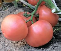 Семена томата Эсмира F1 100 семян Rijk Zwaan