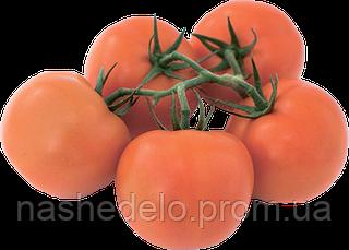 Семена томата Эндевер F1 1000 семян Rijk Zwaan