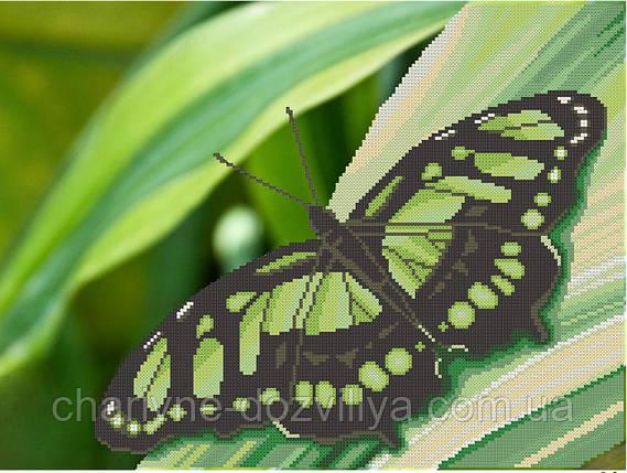 """Схема для вишивки бісером на атласі """"Зелений метелик """", фото 2"""