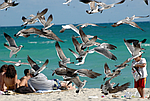 Три Столицы и Пляжи Майами– экскурсионный тур по США 11 ночей/12 дней, фото 4
