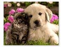 "Картина по номерам GX8799 ""Котенок и щенок"" 40х50см краски акрил +кисть -3шт"