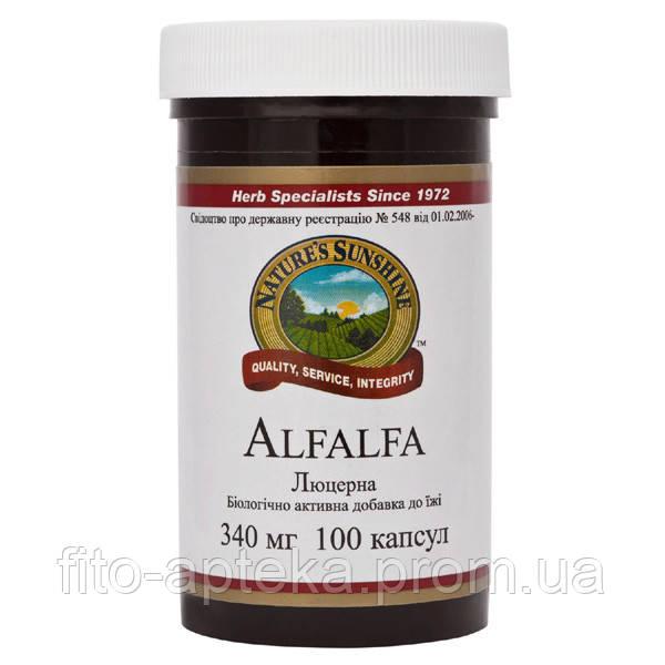 Alfalfa Альфальфа (Люцерна полевая)