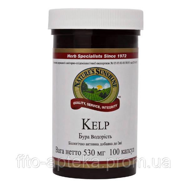 Kelp Келп (Бурая водоросль)