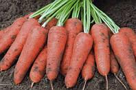Микроклимат складов хранения моркови. Киевская область